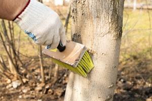 Bomen behandelen tegen ziektes en plagen